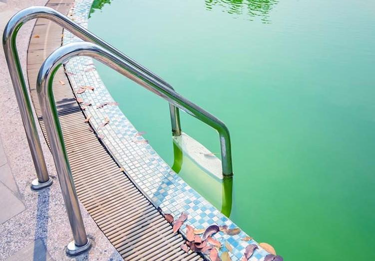 Yuck! I've got algae in my pool!